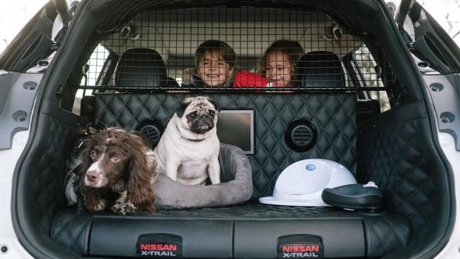 Este vehículo tiene un maletero de 445 litros totalmente modificado para el uso y disfrute de una o dos mascotas, depende de su tamaño.