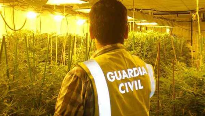 Incautación de marihuana por parte de la Guardia Civil.