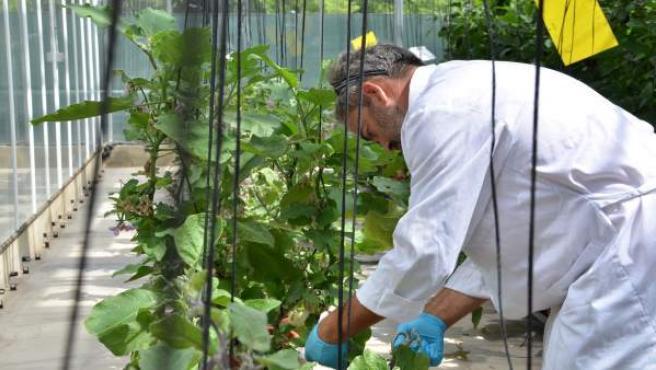 La UPV entre les 100 millors universitats del món en Agricultura