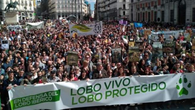 Imagen de la manifestación que recorrió Madrid en defensa del lobo ibérico.