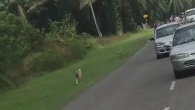 Captura del vídeo donde se aprecia al perro siguiendo el cortejo fúnebre de su dueña.