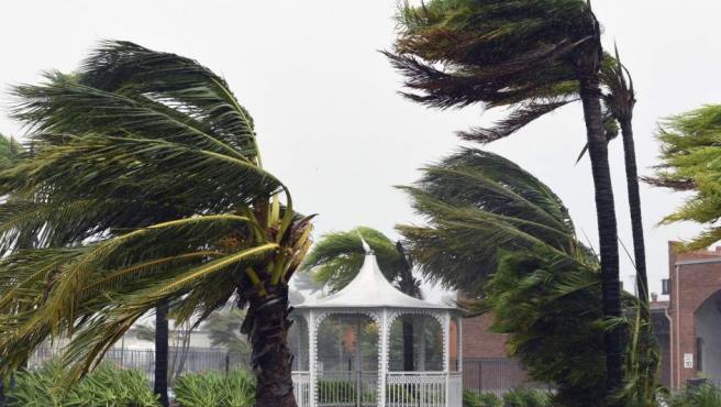 Palmeras azotadas por los fuertes vientos en Airlie Beach, en el estado australiano de Queensland, al paso del ciclón Debbie.