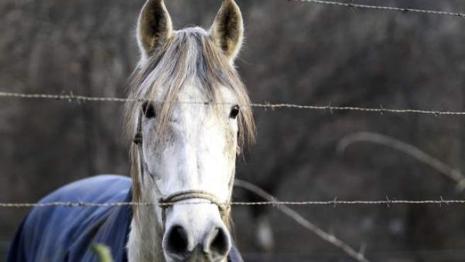Prisión Para Ocho Detenidos Acusados De Venta De Carne De Caballo No Apta Para El Consumo