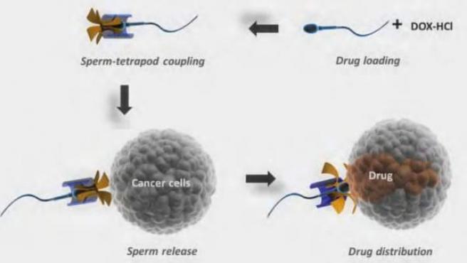 Representación de cómo los espermatozoides pueden ser usados para suministrar medicinas.