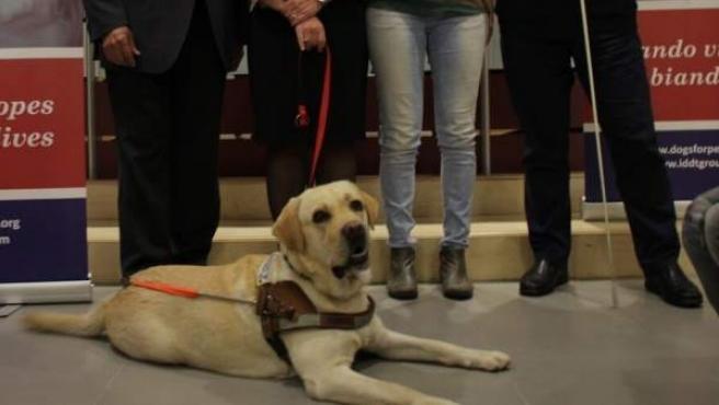 Entrega del primer perro guía adiestrado en Cataluña.