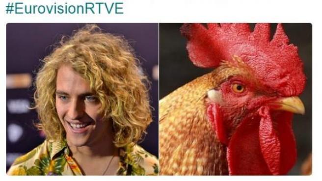 Memes sobre el 'gallo' de Manel Navarro.