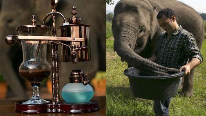 Elefantes utilizados en la elaboración del Black Ivory, junto a una muestra promocional de este café.