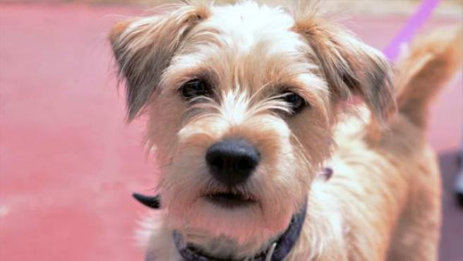 Un perro, en una imagen de archivo.