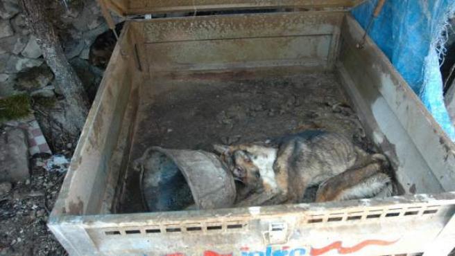 Uno de los perros maltratados.