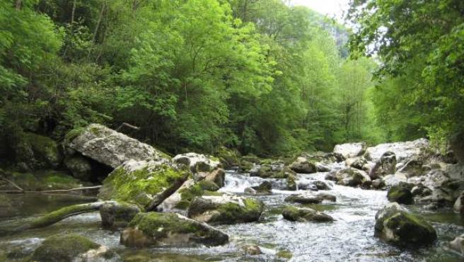 Río Miera.