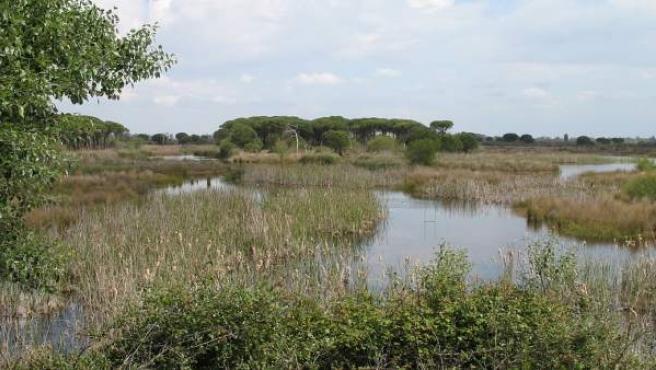 Centro de visitantes El Acebuche, en el Parque Nacional de Doñana.