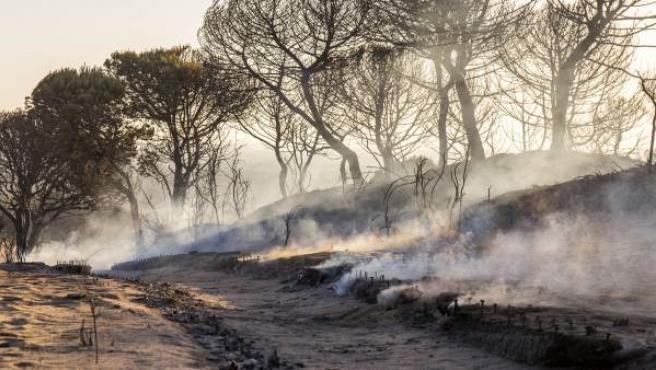 Cuesta Maneli, calcinada tras el incendio junto a Doñana.
