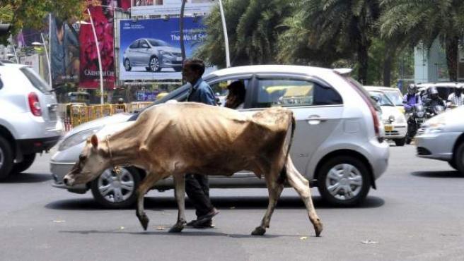 Un hombre camina con su vaca por una calle de Bangalore (India). La venta y posesión de carne bovina está prohibida en la región.