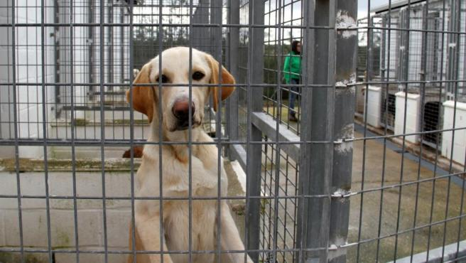Un perro en una perrera municipal.