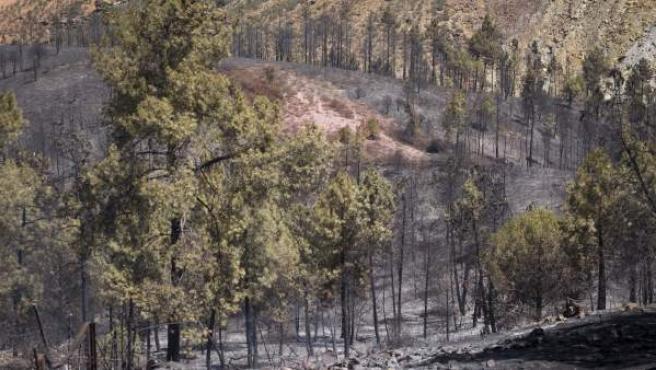 Aspecto tras el incendio forestal declarado en Minas de Riotinto (Huelva).