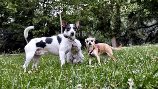 Tres perros en un parque en una imagen de archivo.