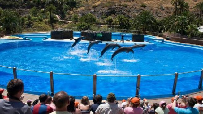 Delfines en Palmitos Park.