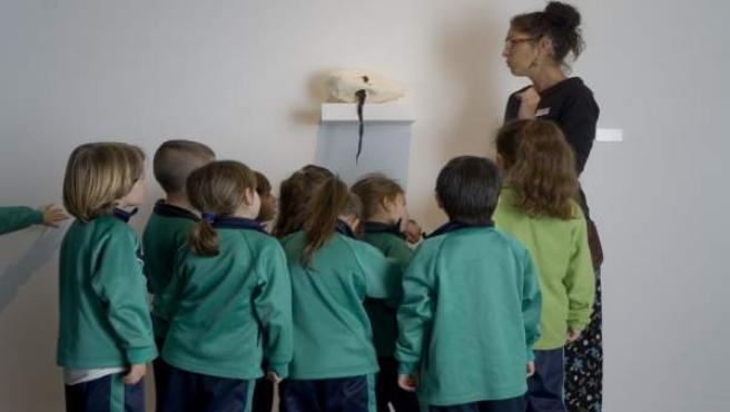 Nota De Prensa Y Fotografías: Tea Proyectos Escolares