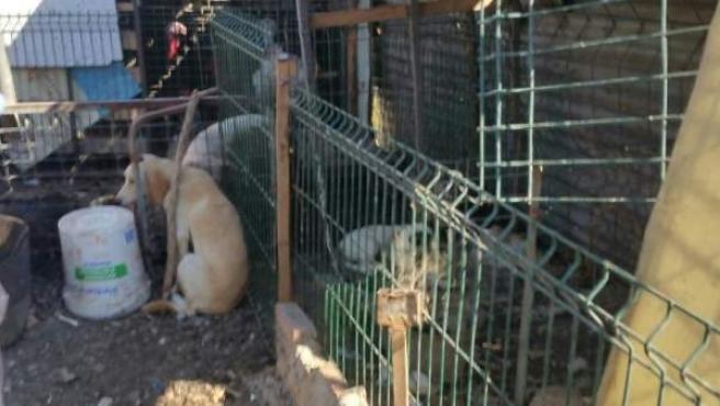 Perros rescatados en Algeciras.