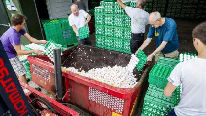 Granjeros desechan huevos en una granja en Onstwedde, Holanda.