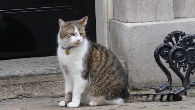 Larry, el gato de Downing Street (Londres).
