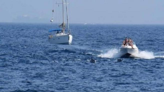 Delfines en la Bahía de Algeciras