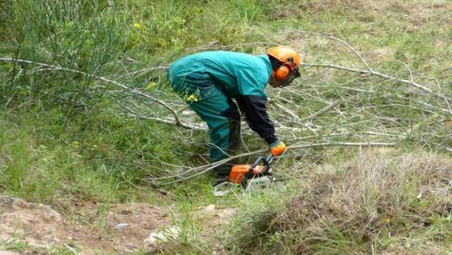 Endesa invierte casi 900.000 euros en limpieza de masa forestal