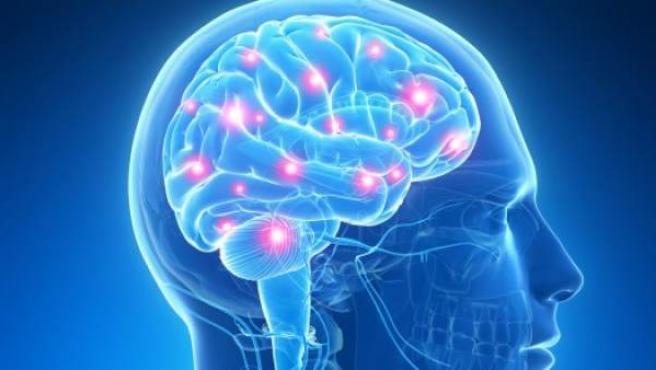 Ilustración de la actividad cerebral, en una imagen de archivo.