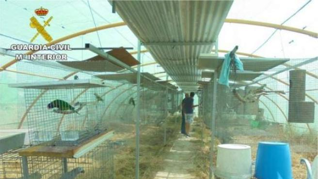 Especies de aves exóticas incautadas en un albergue de Elche