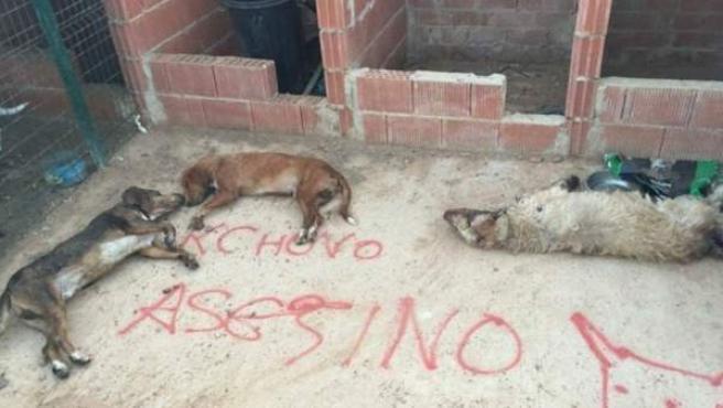 Dramática escena de los perros muertos que Francisco Alcalá encontró al llegar a su finca.
