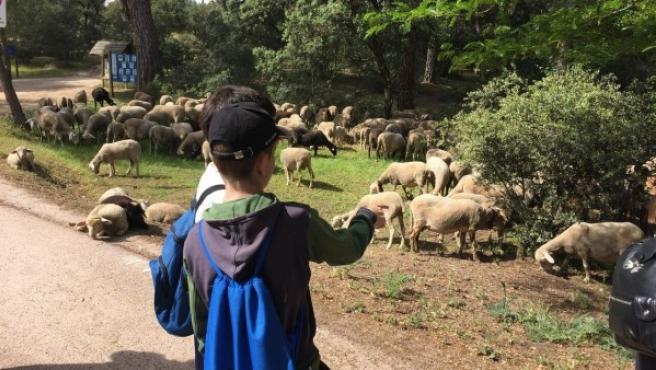 Imagen de unos niños en la visita a la Asociación ecologista GREFA