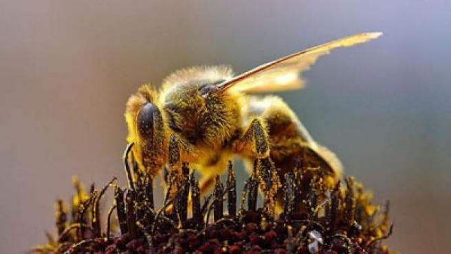 Las abejas estaban entre el capó y la matrícula trasera.