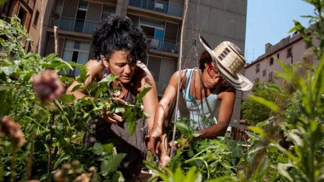 Dos mujeres riegan e inspeccionan la frondosa plantación de verduras del Hortet del Forat, en el céntrico barrio de la Ribera de Barcelona.