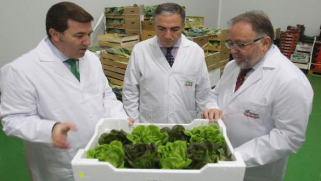 Grupo Hermanos Gallego Málaga promoción sabor a málaga innovación frutas verdura