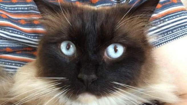 El gato Ykiyo fue hallado muerto y se cree que es una de las posibles víctimas del asesino de Croydon.