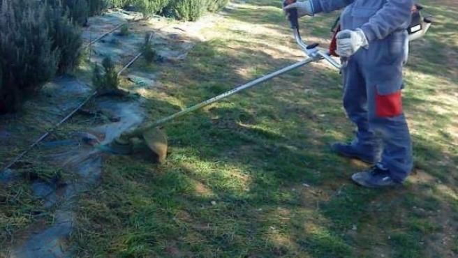 Trabajos de jardinería en la Escuela Taller Ricardo Magdalena.