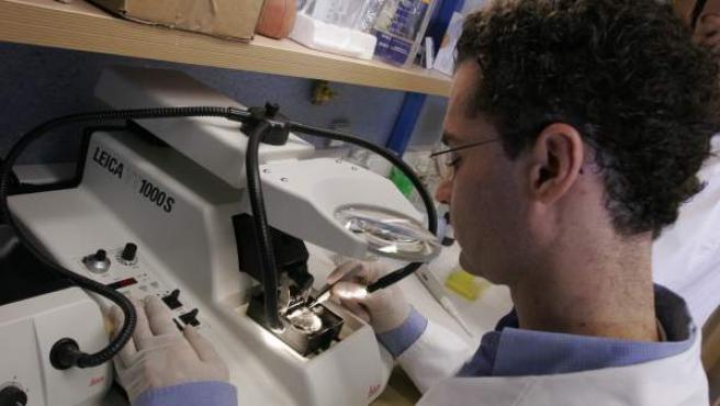 Un becario en prácticas trabajando en un laboratorio.