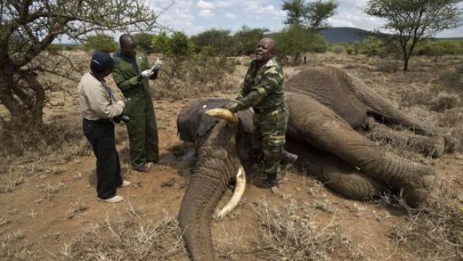 Tres protectores de animales con un elefante muerto en Kenia