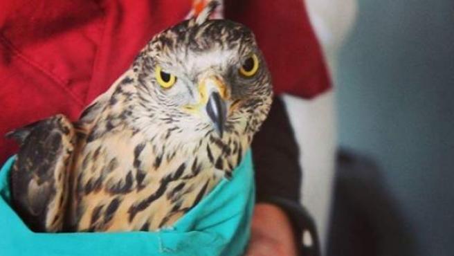 Uno de los animales atendidos por GREFA.
