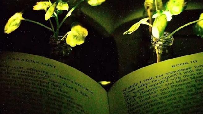 Pronto podríamos usar una de las plantas que tenemos en casa para leer por la noche. Los ingenieros del Instituto Tecnológico de Massachusetts han utilizado nanopartículas para hacer brillar en la oscuridad una planta normal.