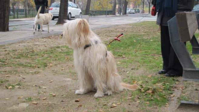 Perros en un parque.