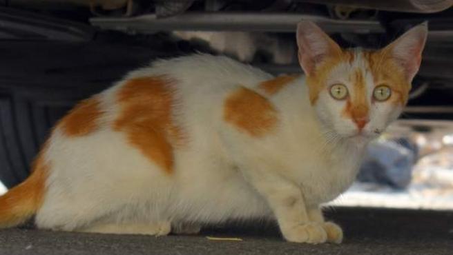 Imagen de un gato callejero.