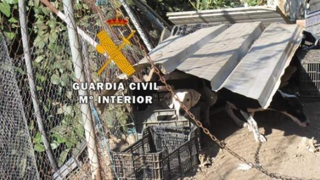 Imagen de varios de los perros intervenidos.