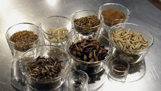 Los insectos como nuevo ingrediente en nuestros platos.