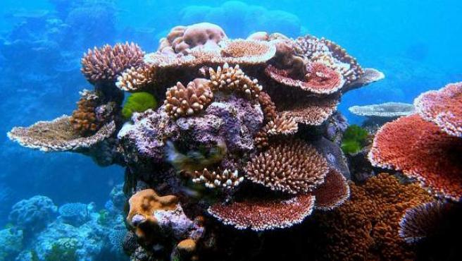 Corales en la Gran Barrera de Arrecifes, cerca de Cairns, Queensland, Australia.