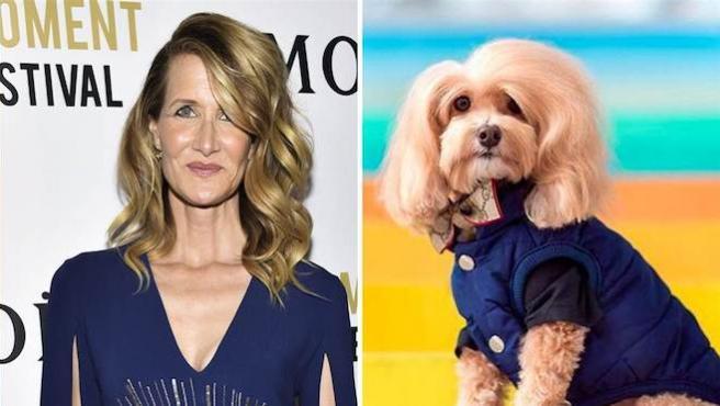 Laura Dern tiene una doble (y es una perra)