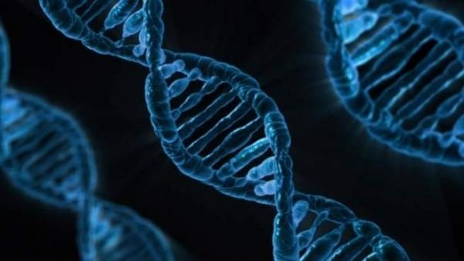 Una cadena de ADN en un análisis genética.