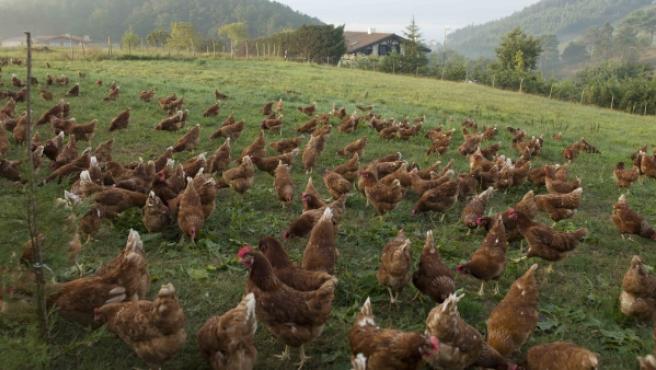 Imagen de una de las granjas que pertenecen a la asociación Avialter.