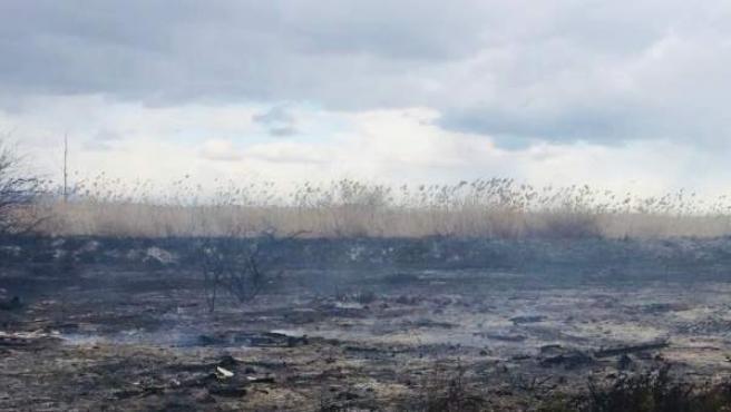 Incendio en una zona cercana al parque natural de El Hondo