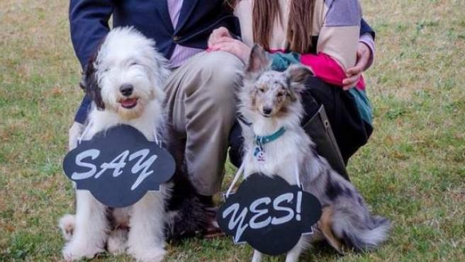 Dos perros ayudan a comprometerse a sus dueños.